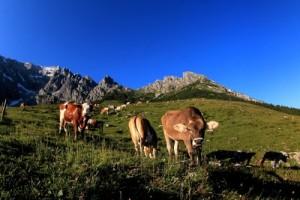 Hält man in Deutschland zu viele Kühe?
